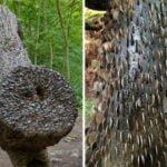 Paise Wala Ped | पैसे वाला पेड़ | इस पेड़ पर लगे है दुनियाभर के हज़ारों सिक्के