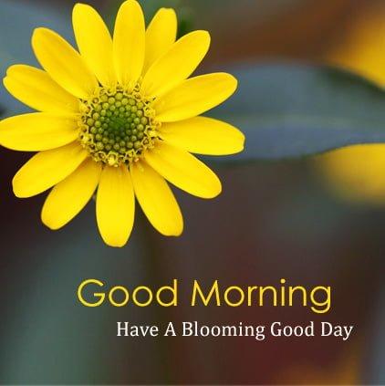 Good Morning Hd Facebook DP