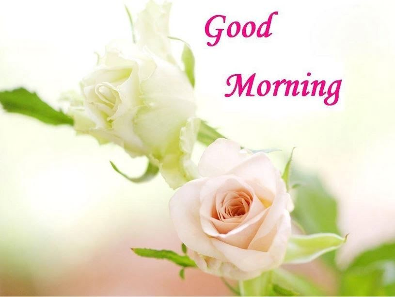 Happy Good Morning Hd Wallpaper