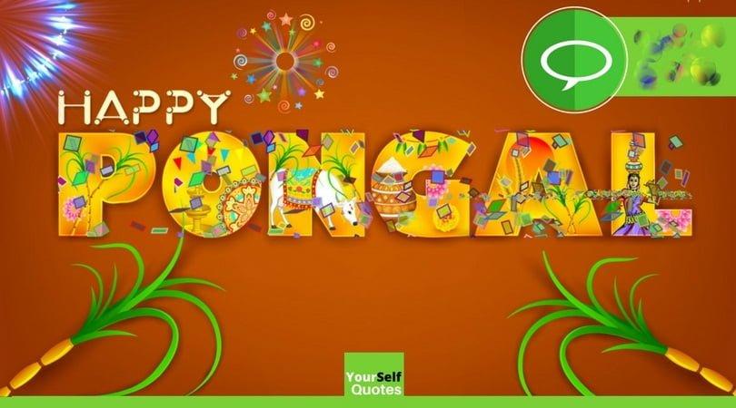 Happy Pongal Hd Wallpaper
