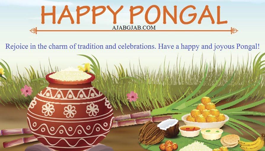Happy Pongal Status