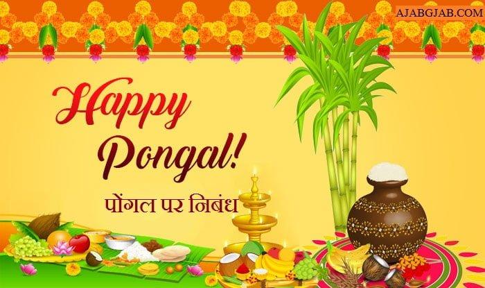 Pongal Essay In Hindi