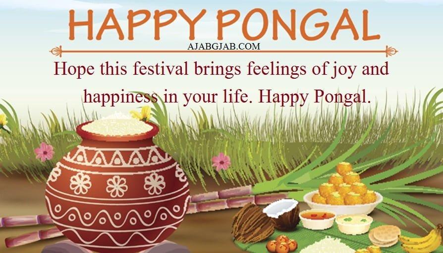 Pongal Slogans