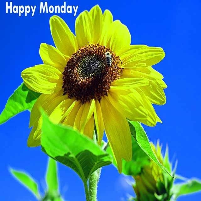 Happy Monday Good Morning PhotosFor Facebook