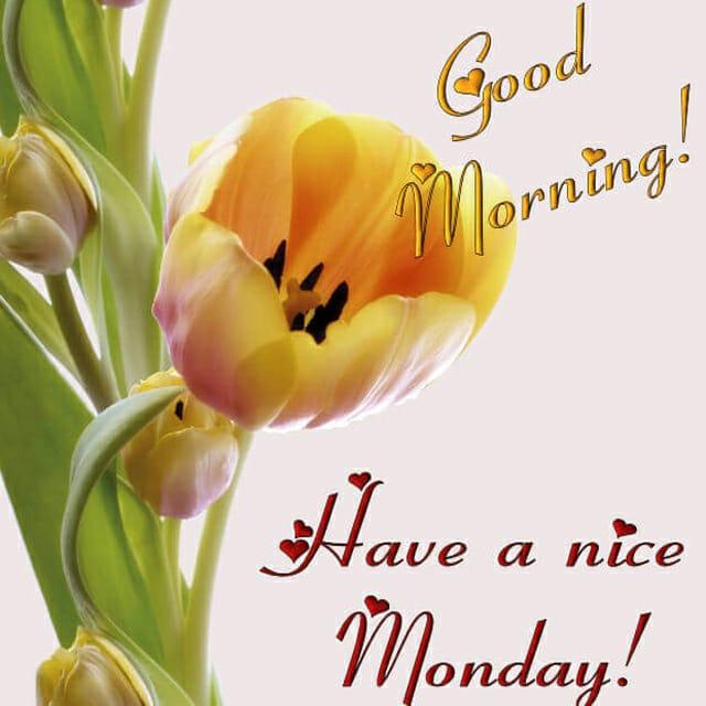 Happy Monday Good Morning PhotosFor Whatsapp
