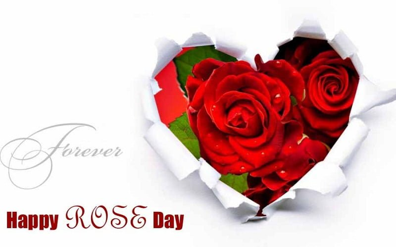 Happy Rose Day Facebook Dp 2019