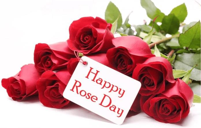 Happy Rose Day WhatsApp Dp