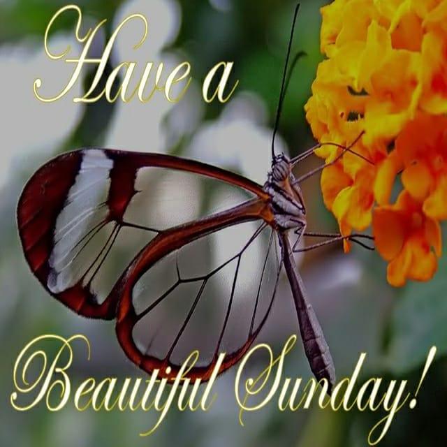 Happy Sunday Hd PhotosFor Facebook