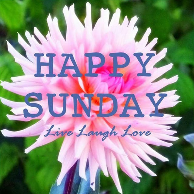 Happy Sunday Hd Wallpaper