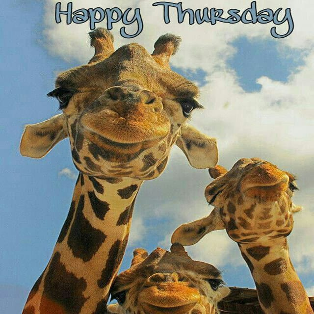 Happy Thursday Hd Wallpaper