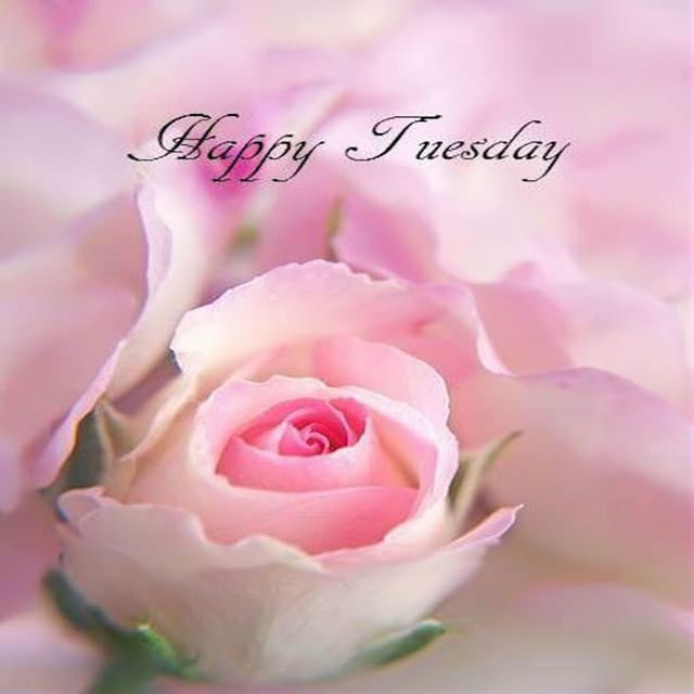 Happy Tuesday Hd Greetings