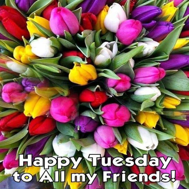 Happy Tuesday Hd GreetingsFor Whatsapp