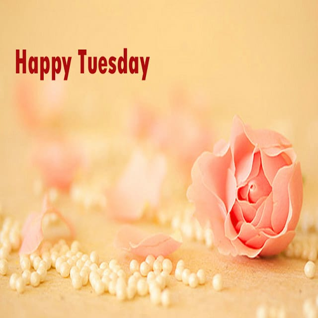 Happy Tuesday Hd Photos