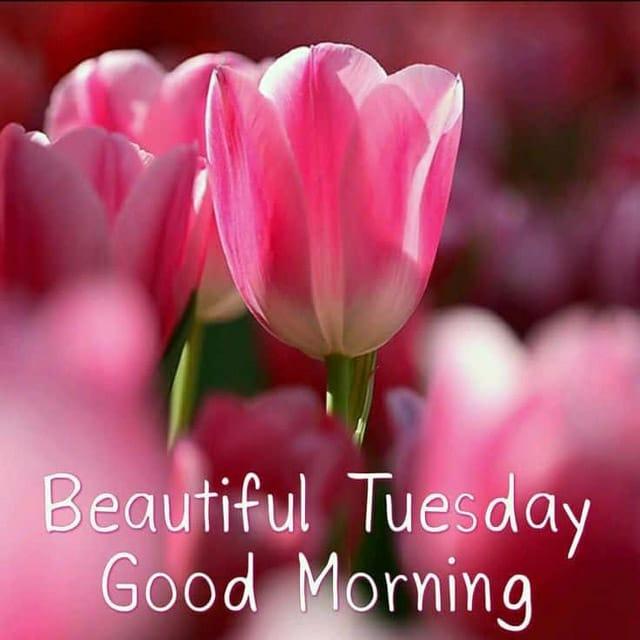 Happy Tuesday Hd Photos