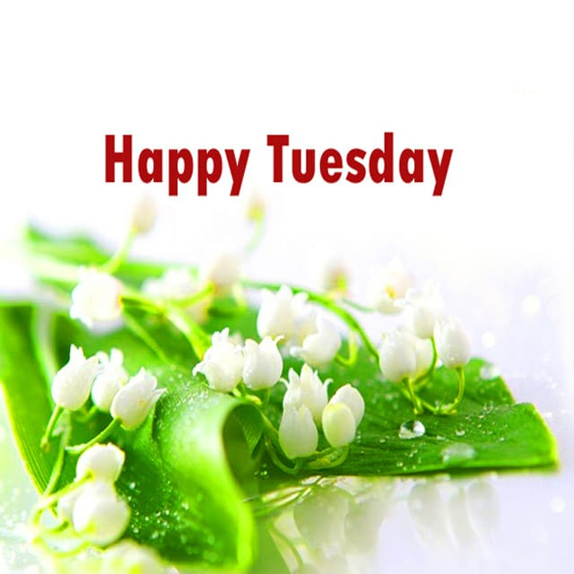 Happy Tuesday Hd Pictures