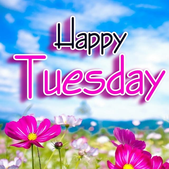 Happy Tuesday Hd WallpaperFor Facebook