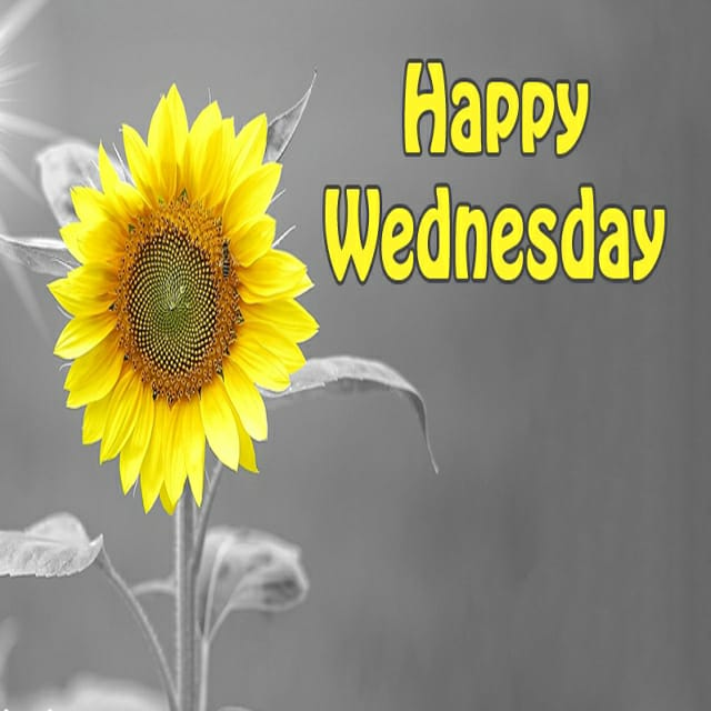 Happy Wednesday Hd Greetings For WhatsApp