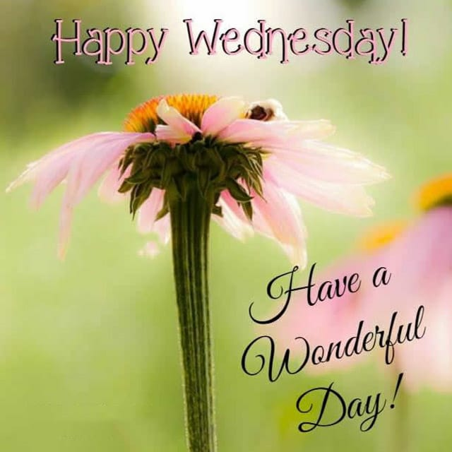 Happy Wednesday Hd Images For Facebook