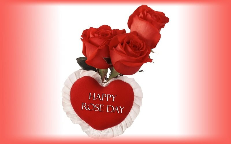 Rose Day Facebook Dp