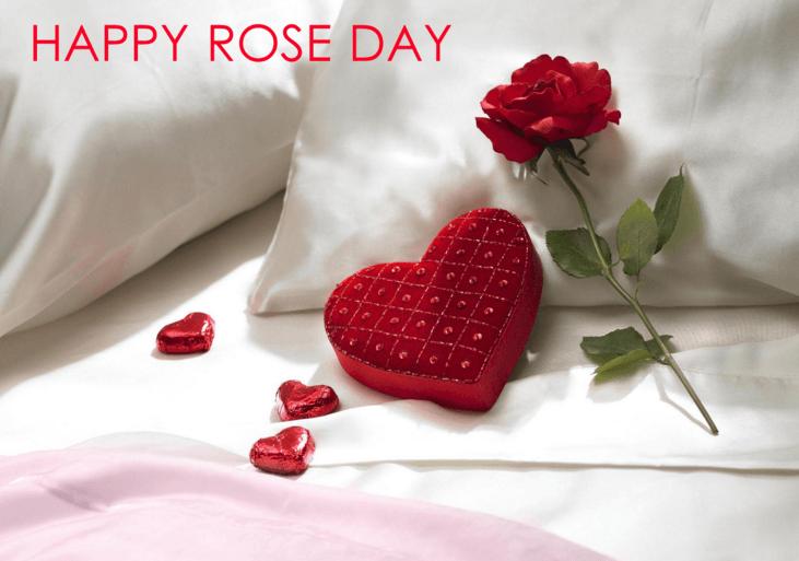 Rose Day Facebook Dp 2019
