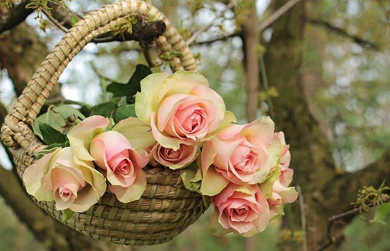 Rose Day Hd Photos
