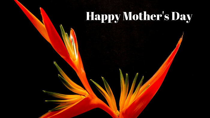 Happy Mothers Day WhatsApp Pictures