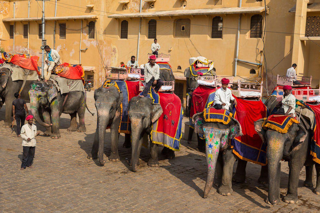Elephants at Amer Fort