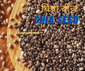 Chia Seeds In Hindi