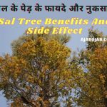 Sal Tree Benefits And Side Effect