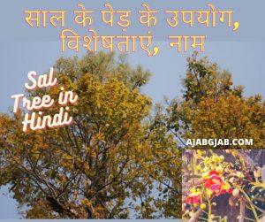 Sal Tree in Hindi