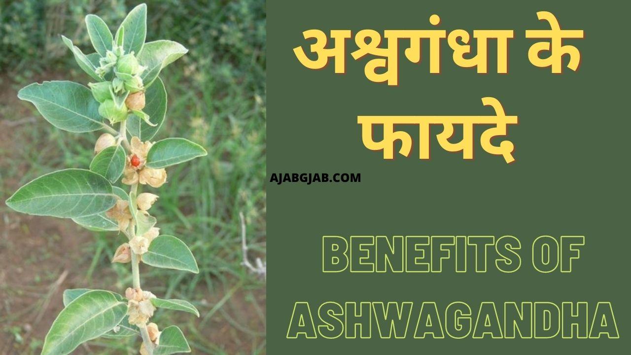 Ashwagandha Ke Fayde In Hindi